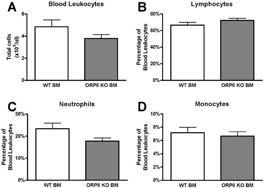No effect on blood leukocyte counts in LDLr KO mice