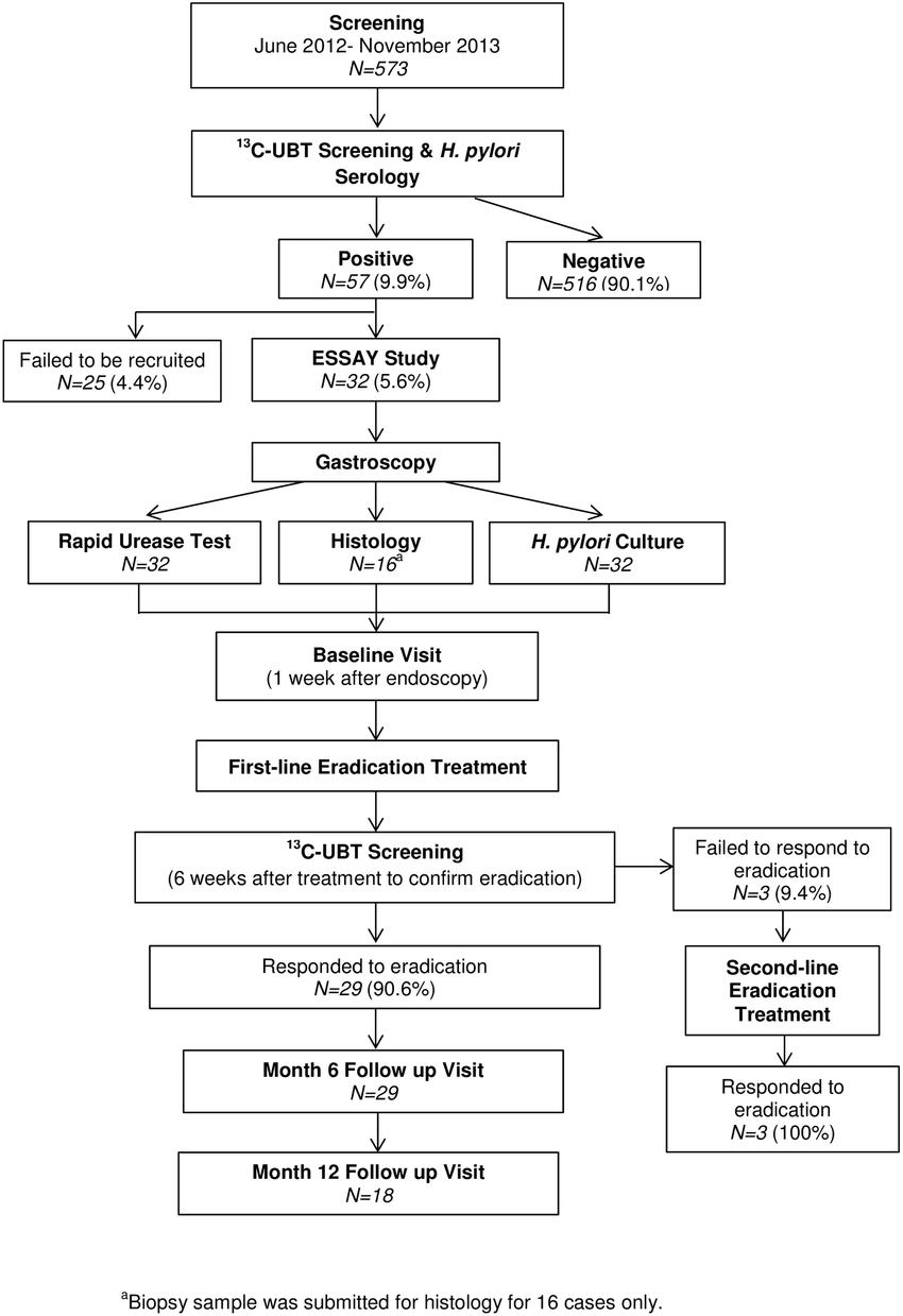 medium resolution of summary of essay study
