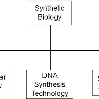 Multi-level model of synthetic biology compared to its