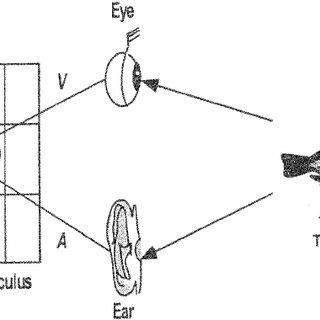 (PDF) Using Bayes' Rule to Model Multisensory Enhancement