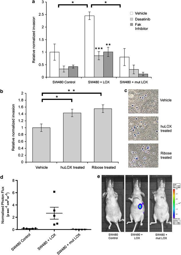 LOX-mediated matrix stiffening drives invasion in vitro