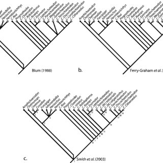 (PDF) Molecular phylogenetics of Chaetodon and the