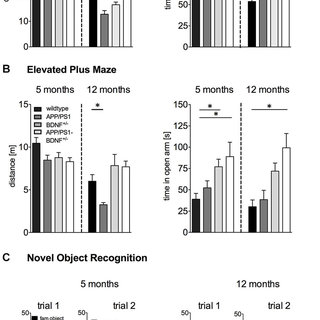 Learning performance in a Two Way Active Avoidance task