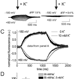 effects of extracellular k on voltage dependent fluorescence changes a b voltage step induced fluorescence responses of tmrm labeled oocytes expressing  [ 718 x 1440 Pixel ]