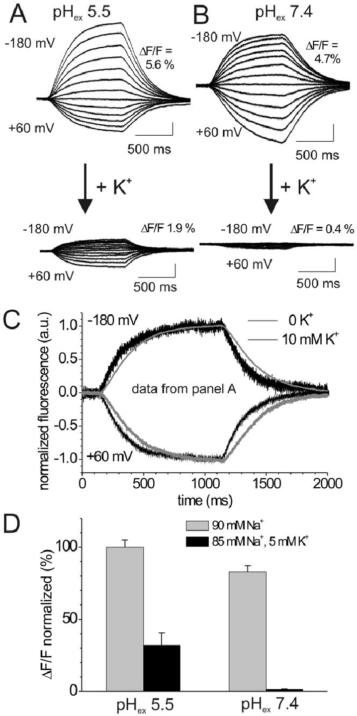 medium resolution of effects of extracellular k on voltage dependent fluorescence changes a b voltage step induced fluorescence responses of tmrm labeled oocytes expressing