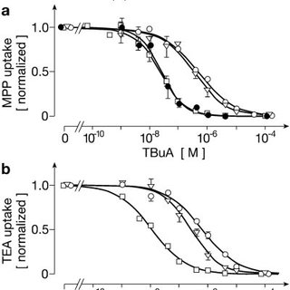 TBuA-induced capacitance changes. Oocytes expressing rOCT1