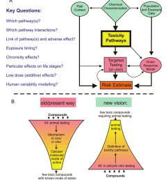 approach to toxicity testing suggested by the nrc usa a tox c ty pathways e at the heart of the approach of hazard eva uat on and are exam ned w th  [ 850 x 989 Pixel ]