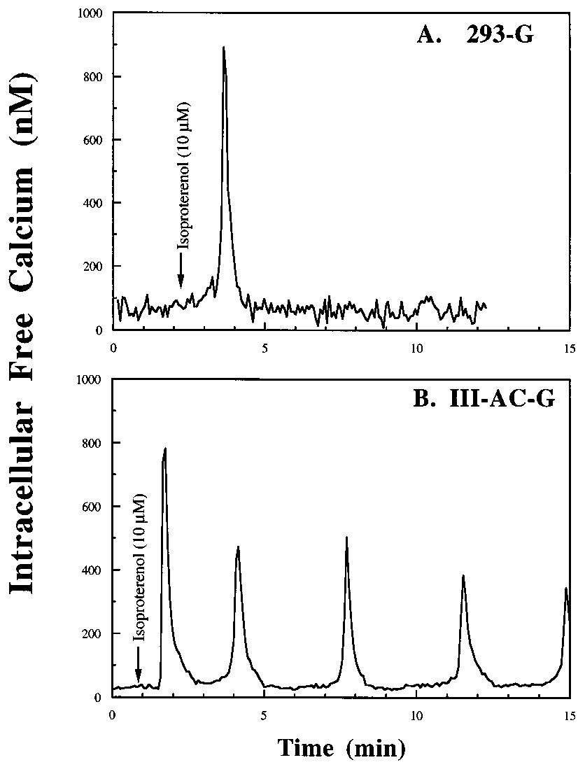 Isoproterenol stimulation of Ca 2 oscillations in HEK293