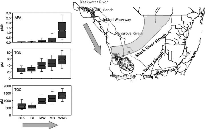 Spatial differences in alkaline phosphatase activity (APA