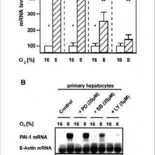 (PDF) Regulation of the hypoxia-dependent Plasminogen