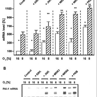 Regulation of PAI-1 mRNA expression by overexpression of