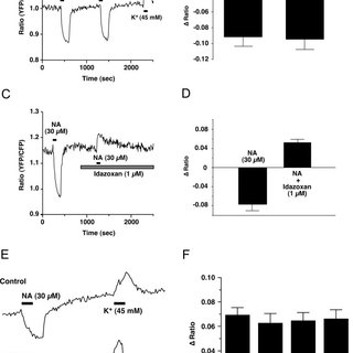 NA hyperpolarizes orexin neurons. A: in current clamp mode
