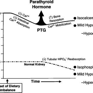 49 Embryology of the thyroid and parathyroid glands. The