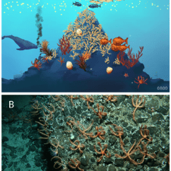 Use Animal Research Diagram Combination Waste And Vent Examples Of Seamount Images Produced By Censeam For Educators... | Download Scientific ...