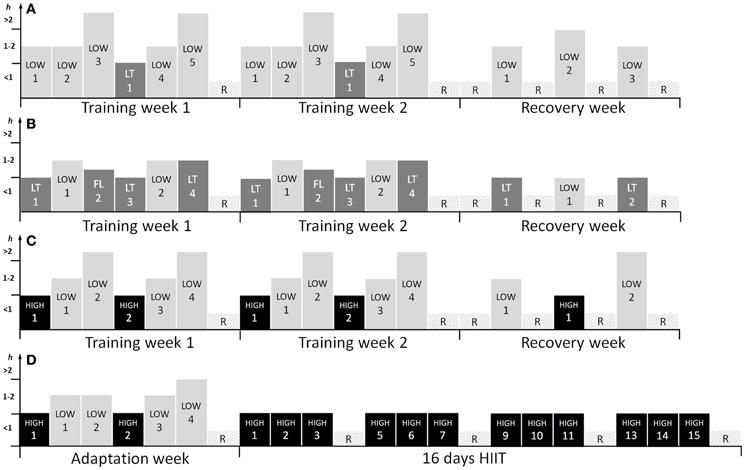 Training program for 3-weeks of (A) high volume (HVT), (B
