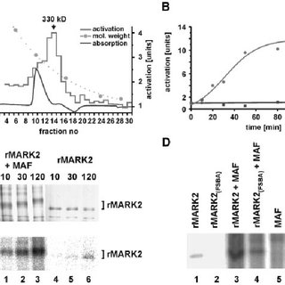 (PDF) MARKK, a Ste20-like kinase, activates the polarity
