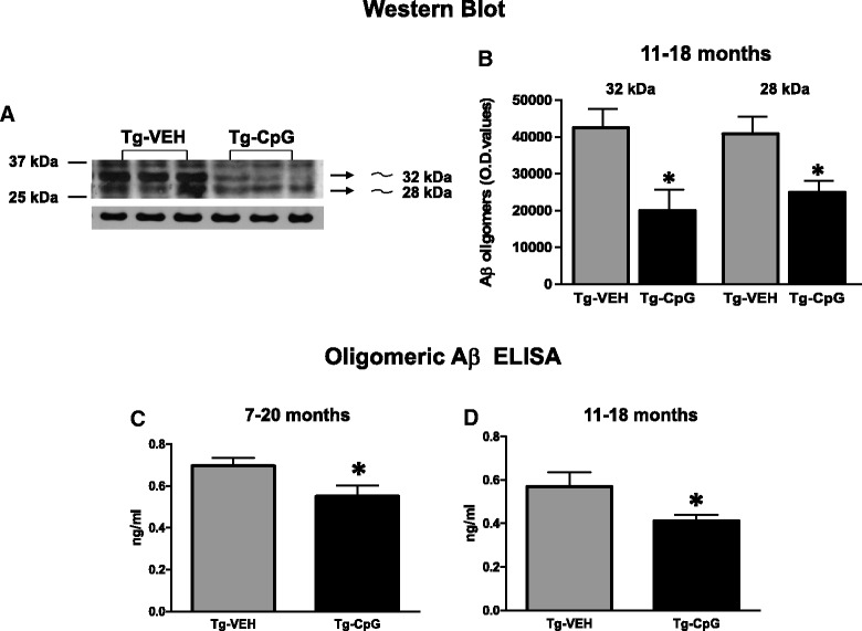 Assessment of Aβ oligomers. Western blot of brain
