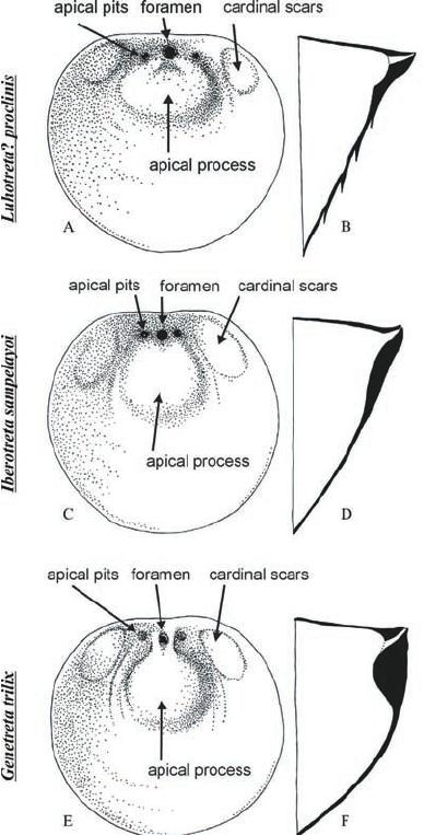 Interior (A, C, E) and longitudinal cross- sections (B, D
