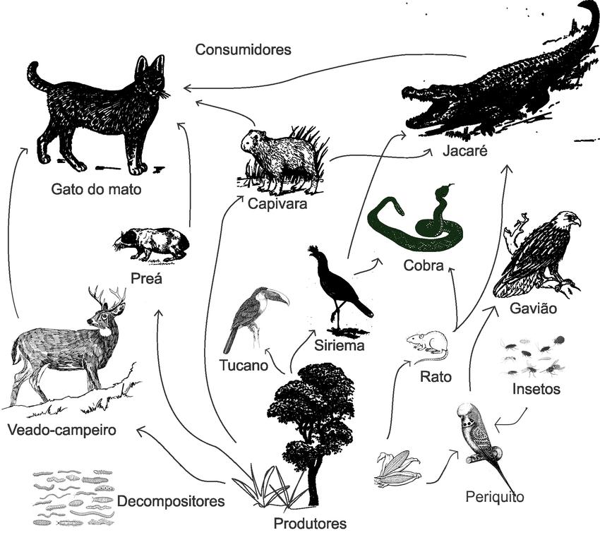 Exemplo de Teia alimentar. Fonte: Adaptado de BAHIA (2004