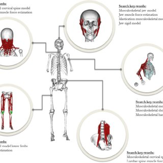 (PDF) Rigid musculoskeletal models of the human body