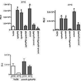 Lipid A analysis from E. coli expressing Y. enterocolitica