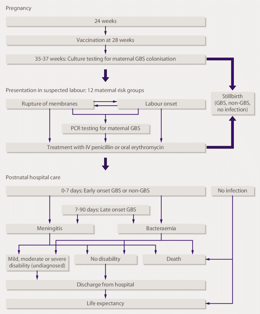 hight resolution of flow diagram showing sequence of events included in the cost effectiveness model the 12