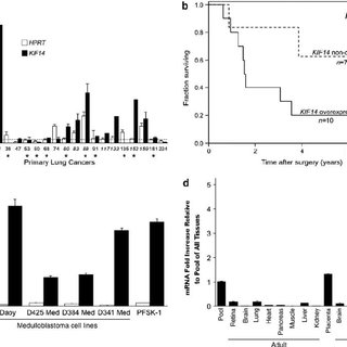 KIF14 mRNA is highly expressed in lung tumors