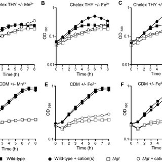 Cation dependent phenotypes of the Δlgt strain. (A) Uptake
