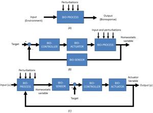 3 General block diagrams of biological processes (A