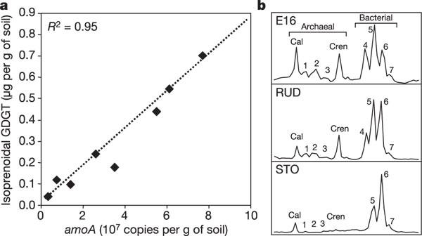 Archaea predominate among ammonia-oxidizing prokaryotes in