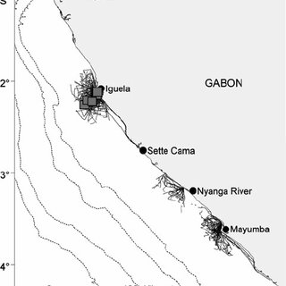(PDF) Killer whales ( Orcinus orca) in Angolan and Gulf of
