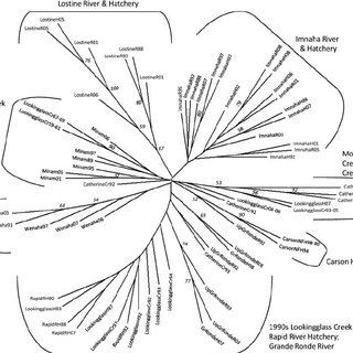 A neighbor-joining, consensus tree of Cavalli-Sforza and