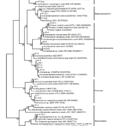 phylogenetic tree of sequences obtained from houseflies based on a dgge analysis the [ 850 x 1205 Pixel ]