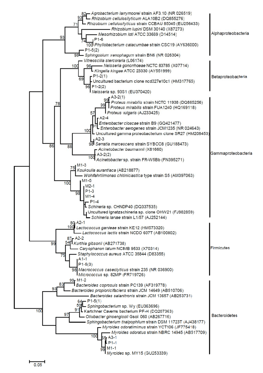 hight resolution of phylogenetic tree of sequences obtained from houseflies based on a dgge analysis the