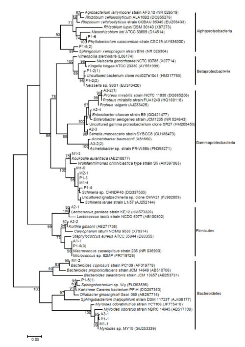 small resolution of phylogenetic tree of sequences obtained from houseflies based on a dgge analysis the