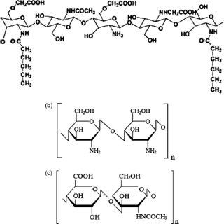 (PDF) Electrospinning of Amphipathic Chitosan Nanofibers