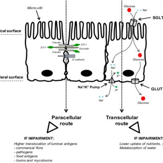 (PDF) Modulation of Intestinal Functions Following