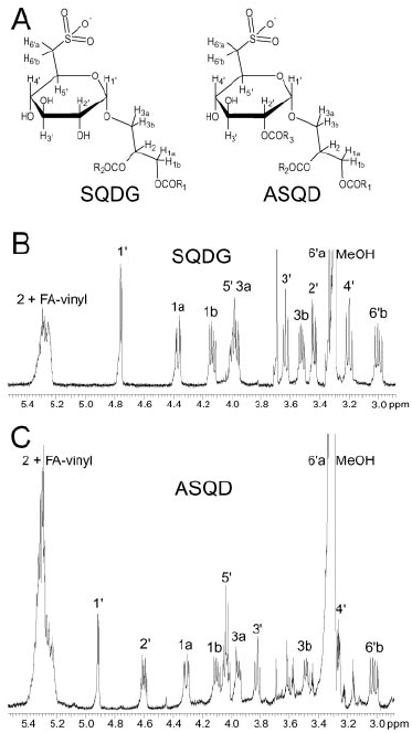 Proton NMR spectra (500 MHz) of SQDG and ASQD. A