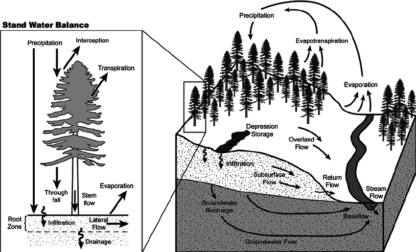 Hillslope hydrologic cycle and stand water balance. The