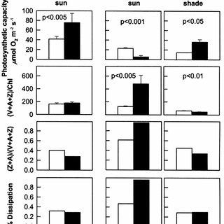 (PDF) Photosynthesis, xanthophylls, and D1 phosphorylation
