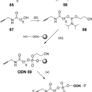 Alkyne, amine and azide reagents, nucleosides and