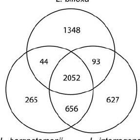 (PDF) Genome Sequence of the Saprophyte Leptospira biflexa
