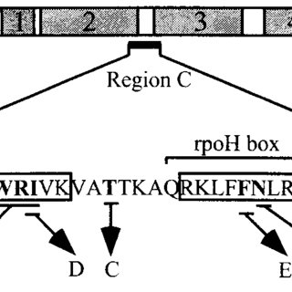Mutational alterations of 32. 32 is shown schematically