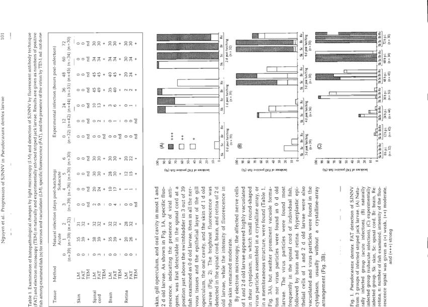 Pseudocaranx dentex. FAT detection of SJNNV from 3 groups of ...