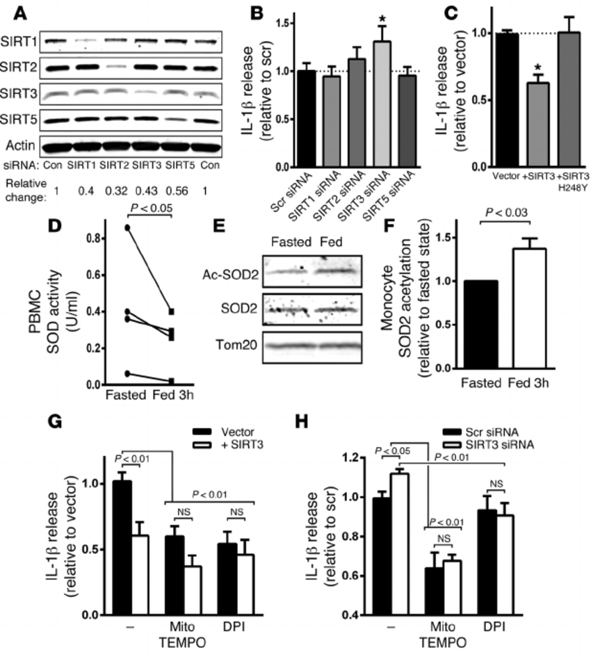 SIRT3 levels modify NLRP3 activation and acetylation of
