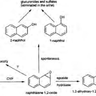 (PDF) Examination of Urinary Beta-Naphthol as a biomarker