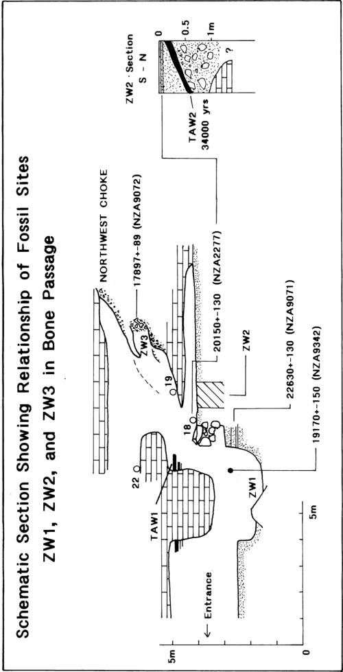 small resolution of a schematic section of part of the bone passage showing the vertical download scientific diagram
