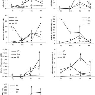 (PDF) Transcriptional activity of the MADS-box ALQ/TAGL1