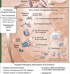 anthrax diagram [ 850 x 1289 Pixel ]