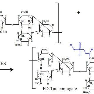 ( A ) Schematic diagram of the fucoidan-taurine (FD-Tau